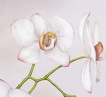 Orchid by Lars Furtwaengler