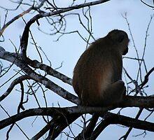 lonely monkey by Veronica Ek