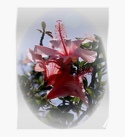 Cuenca Flowers Poster
