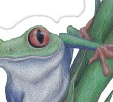 Red-Eyed Tree Frog Sticker