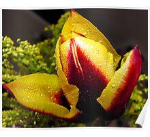Tulip Drip Poster