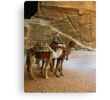 Camel Driver Petra, Jordan Canvas Print