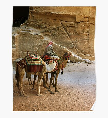 Camel Driver Petra, Jordan Poster