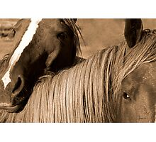 Young Colts Photographic Print