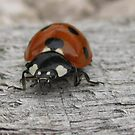 ladybird by millymuso