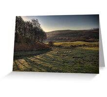 Early Morning Grazing, Scotland Greeting Card