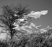 Ghosts of Winter, Lincolnshire by Mark Lancaster