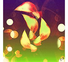 """ Zantedeschia "" Photographic Print"