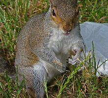 Abuse from a squirrel by Sandra Caven
