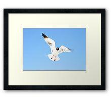 Floridian Gull Framed Print