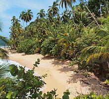 Wild tropical sandy beach with lush vegetation by Dam - www.seaphotoart.com