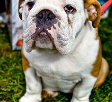 British Bulldog by nataraki76