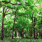 Green Forest by Sandra Moore