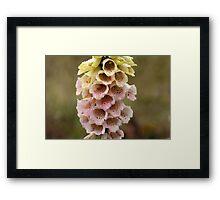 Common Foxclove Flowers Framed Print
