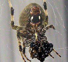 Eww....spider by hayyel
