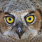 My Name Is Earl (The Owl) by Craig Durkee
