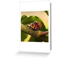 Pollen covered Ladybugs Greeting Card