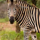 Piggyback by Explorations Africa Dan MacKenzie
