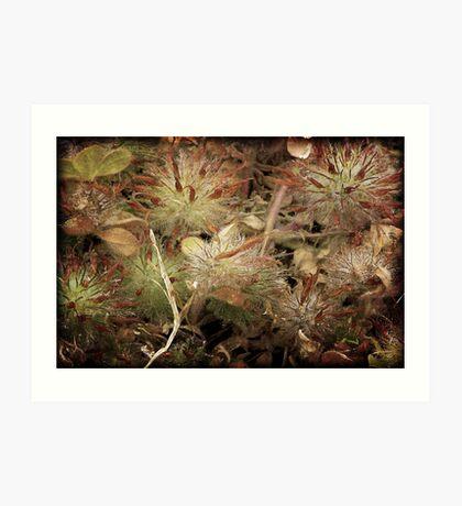 Weeds and Wildflowers  3 Art Print
