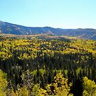 Yellow Tree Tops - Durango, Colorado by jiggy