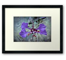 Weeds and Wildflowers  4 Framed Print