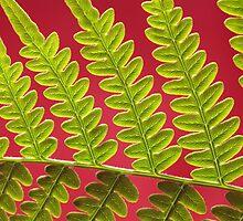 Bracken Fern Leaf by Zosimus