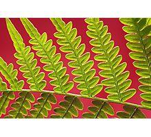 Bracken Fern Leaf Photographic Print