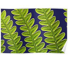 Macro photo of a bracken fern leaf (Pteridium aquilinum) Poster