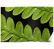 Macro photo of a bracken fern leaf  Poster
