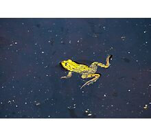 Pond Frog Photographic Print