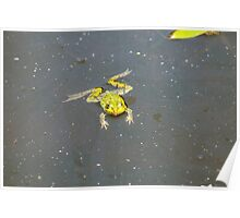 A green pond frog in black water. Poster