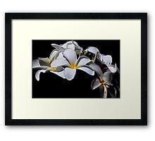 White Delight  Framed Print