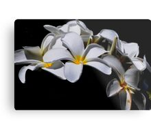 White Delight  Metal Print
