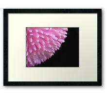 Tubular Pink Framed Print