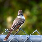 Ash-throated Flycatcher by flyfish70