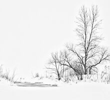Winter's Purity by April Koehler