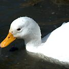 "I'm a little white duck....call me ""Squirt""....!  by Larry Llewellyn"
