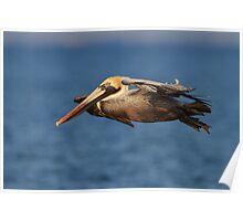 Pelican Glide Poster