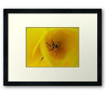 Giallo Framed Print