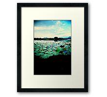 lotus sunset Framed Print