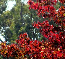 The Autumn that Chills Us by Sherene Clow