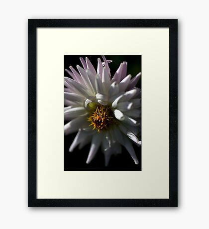 Touched by Mauve Framed Print