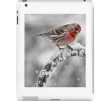 Red Poll -- Cold, But Hungry iPad Case/Skin