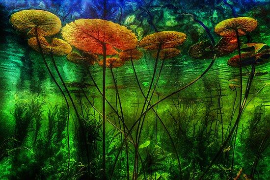 Underwater Lilies by David Rozansky