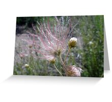 Apache Plume Greeting Card