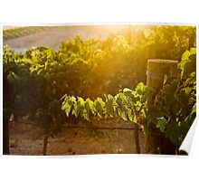 Sunset & Vineyards Poster