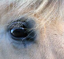 Horses eye by Nordlys