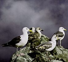Seagulls Settling Down For The Night by Diane Schuster