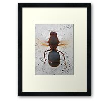 ©NS To Much Cold For Fly IA. Framed Print