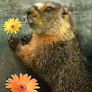 Flower From A Marmot by digitalmidge